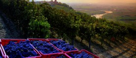 Langhe-Roero and Monferrato included in UNESCO World Heritage List